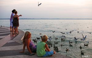 Feed the Birds. by DominikJPhotography
