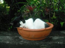 potted kitty cat version 2 by Oznas