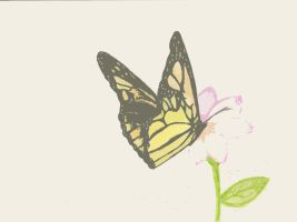 butterfly_edited by youngsoul