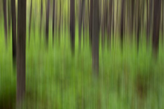 Forest Greens by houselightgallery