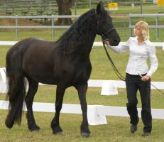 Friesian Walk 3 by Araluen-Ekala