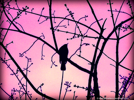 .:Pink Sky Robin:. by worldtravels
