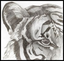 graphite tiger by red-fox357