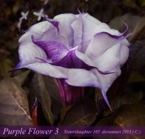 Purple Flower 3 by Sisterslaughter165