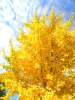 Yellow Tree, Blue Sky by demylovee