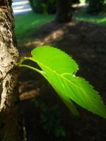 Translucent leaves by AleighaRawr