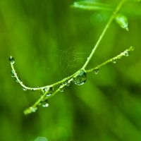 Little Green Drops by eyedesign