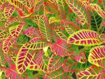 Plant Leaves #02 by DonnaMarie113