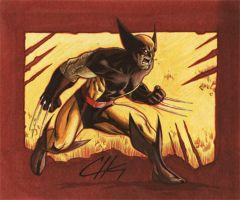Wolverine by n3gative-0