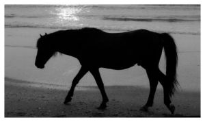 The Black Stallion by painthorse