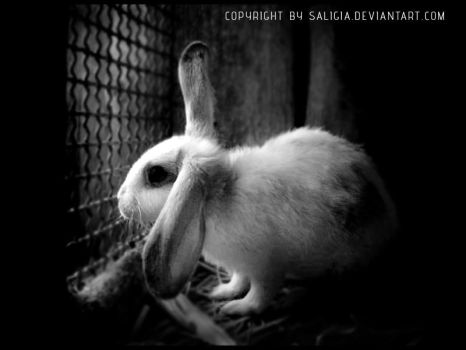 depressed bunny by JuliaDunin