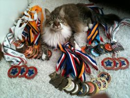 MY CATS A CHAMPION !!! by Ninja-B21
