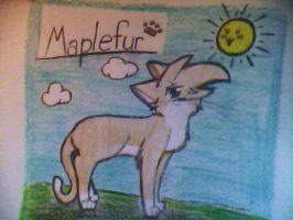 Traditional Art- Maplefur by XAngelkittehX