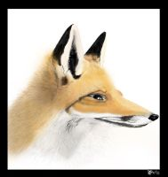 Fox face by Foxia