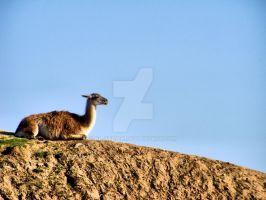 Lama on the hill by NL-Stitch