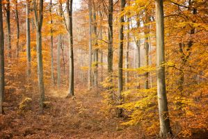 Automne-17 by Fred93
