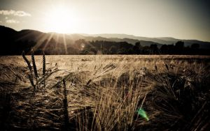 061309_wo by trausse