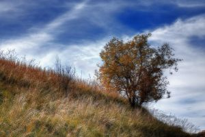 One tree-hdr by yoctox