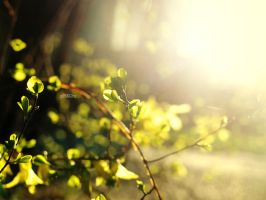 ballad of spring by Clergna