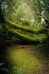Forest Branches + Fallen Trees by ThePurpleYard-Stock
