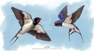 two barn swallows by LilyT-Art