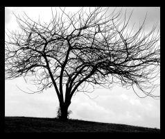 tree... by Depressed-Barbie