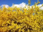 Yellow spring by leveus