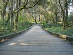 Wooden Path Forest Background by Enchantedgal-Stock