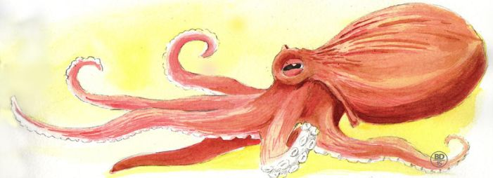 Octopus by uximata