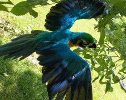 Needle Felted Life-Sized Blue and Gold Macaw by FeatheredFauna