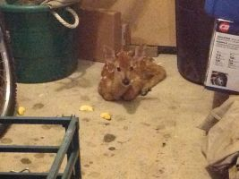 Look who's camping out in our garage. by AClockworkKitten