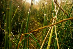 RiverReeds002 by CityWavePhotography