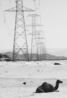 Camel and Powerlines by sapphiresphinx