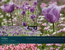Tulips Stock Pack by kuschelirmel-stock
