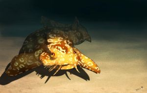 SHARK WEEK '13: Wobbegong by Deserti