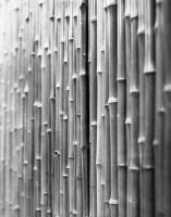 Bamboo at Miller Conservatory by copperrein
