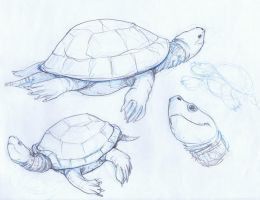 Zoo Sketch - Turtle by Zubby