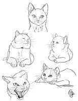 Cats Doodle by CYcat