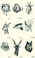 Various Animal Heads by Teagle