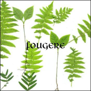 fougere by ShadyMedusa-stock