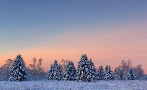 Snowy Trees and the Birds by DeingeL