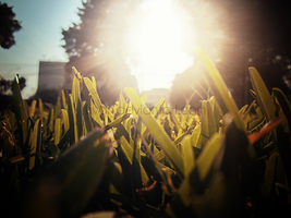 The Grass and the Sun 2 by Hvan