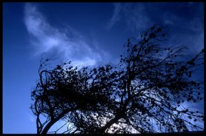 wuthering heights by Pippa-pppx