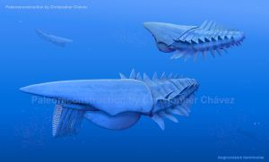 Aegirocassis benmoulae by Christopher252
