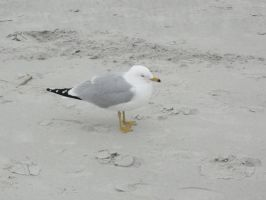 another seagul by izzy-rox13
