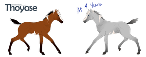 Foal for Total by frenchly