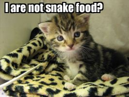 Lolcat - Not Snake Food by KittensNOTfoodplz