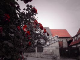 Red Roses by MaliceAnda