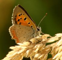 Just a butterfly by Gertcars