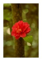 Camellia by cloudofstrife